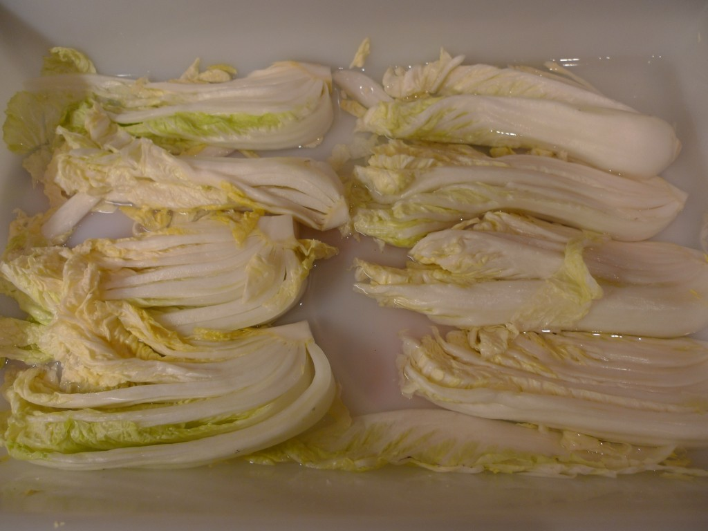 Chinese (napa) cabbage, after curing for 6 hours